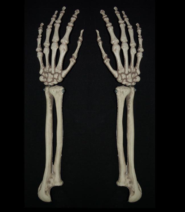 Real Human Skeleton Arm