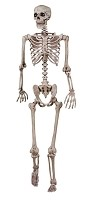 Pose N Stay Skeleton