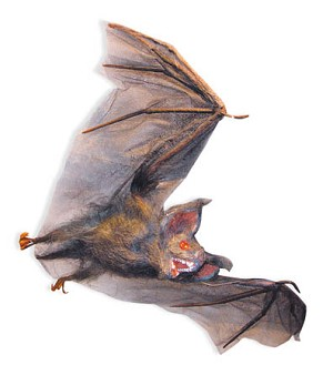 Hairy Bat in Flight