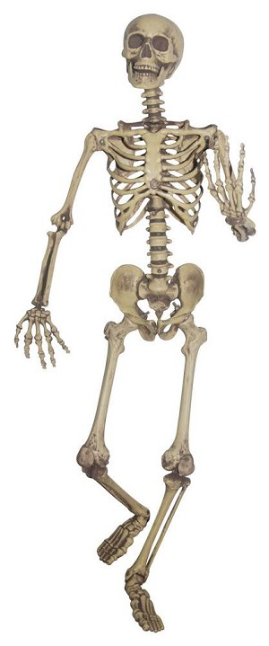 Lifesize Pose and Hold Skeleton