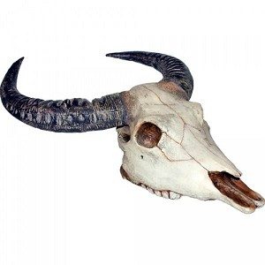 Latex Cow Skull Prop