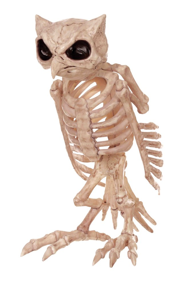 Skeleton Owl Prop