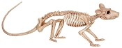 Crazy Bonez Skeleton Rat Prop