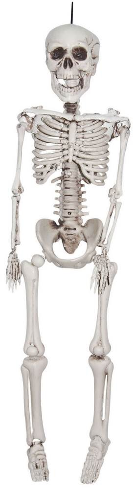 3 Ft Realistic Skeleton