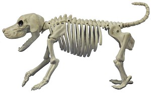 Crazy Bonez Skeleton Beagle Prop